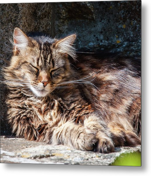 Let Me Sleep... Metal Print