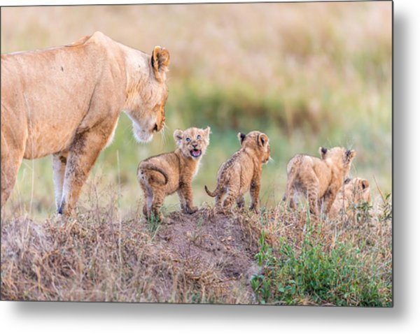 Let's Go Mom Metal Print by Ted Taylor