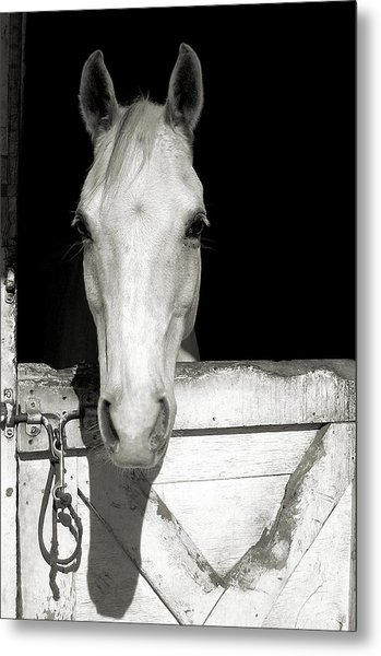 Let's Go Ride Metal Print by JAMART Photography