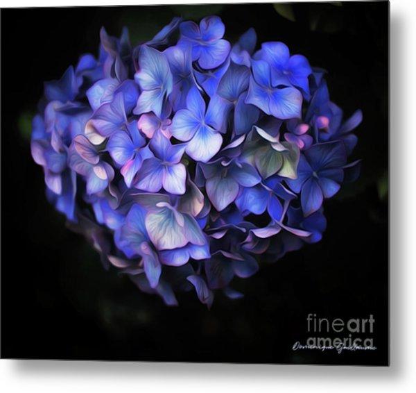 l'Hortensia bleu Metal Print
