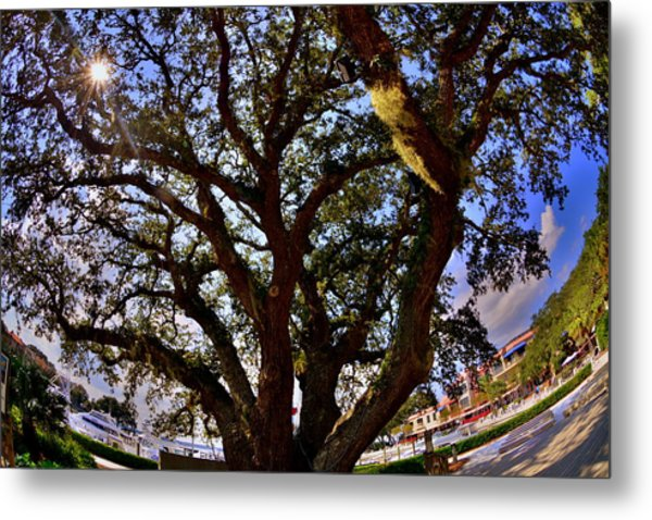 Metal Print featuring the photograph Liberty Oak Harbour Town Hilton Head Sc by Lisa Wooten