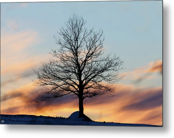 Liberty Tree Sunset Metal Print