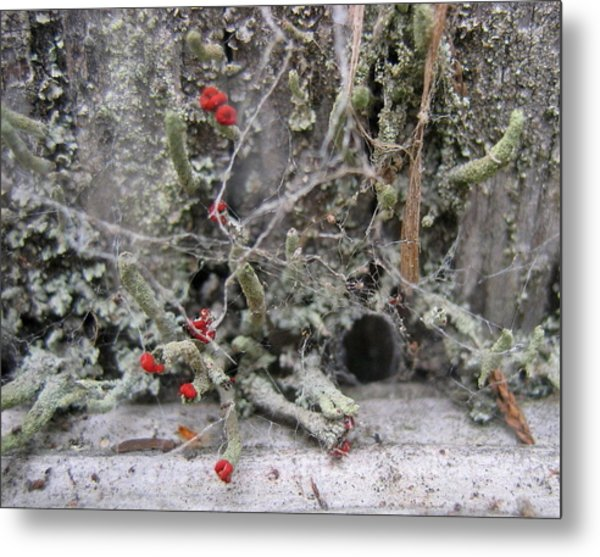Lichen And Old Fence #1 Metal Print