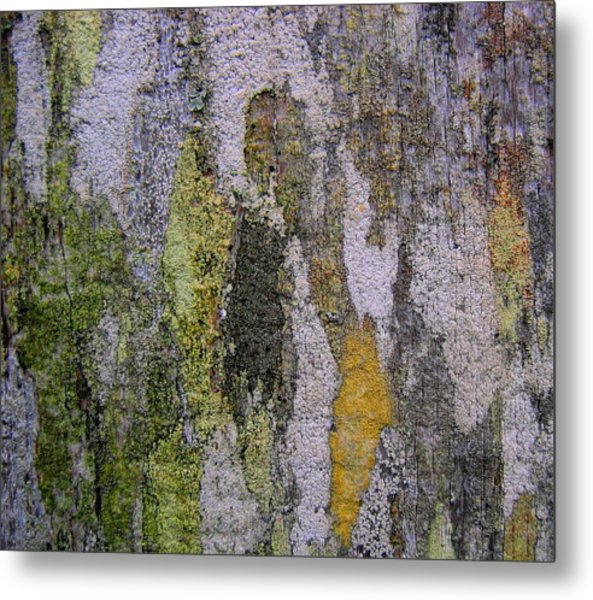 Lichen And Old Fence #4 Metal Print