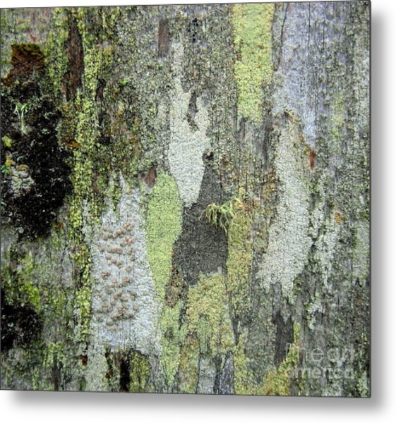 Lichen And Old Fence #5 Metal Print