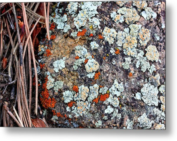 Lichen With Pine Metal Print