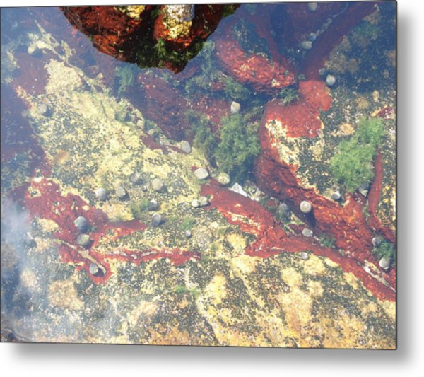 Life Below Metal Print by Clay Peters Photography