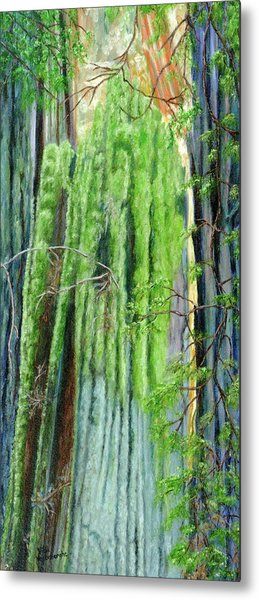 Life In A Redwood Forest Metal Print