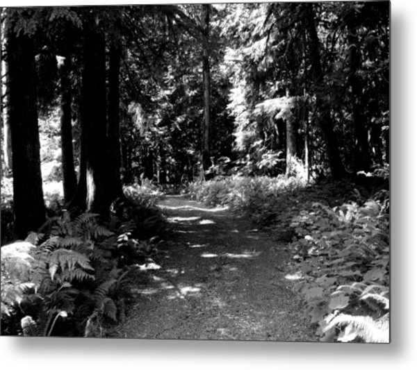 Life Tures  Bw Metal Print by Ken Day