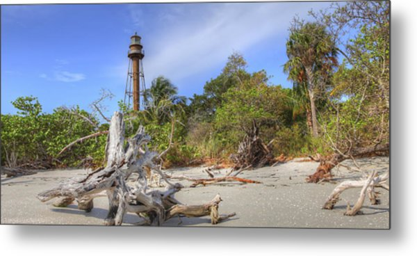 Light Behind The Stump Metal Print