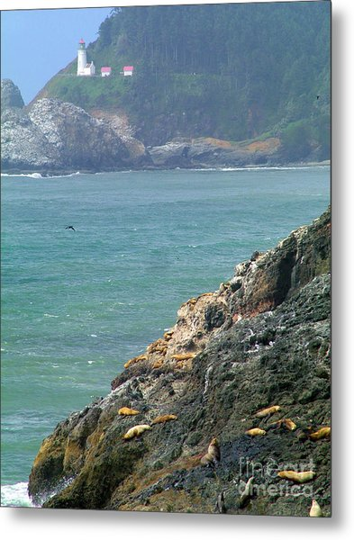 Light House And Sea Lions Metal Print by Nick Gustafson