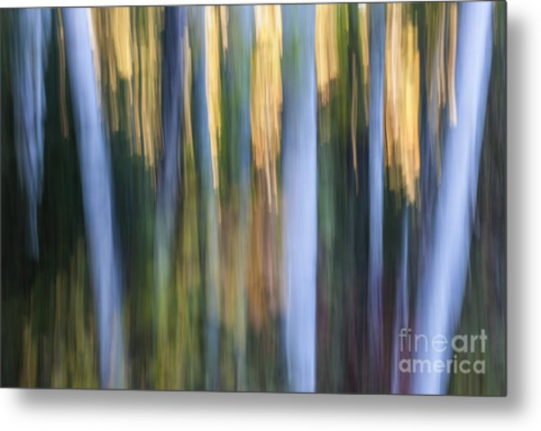 Light In Evening Forest Metal Print