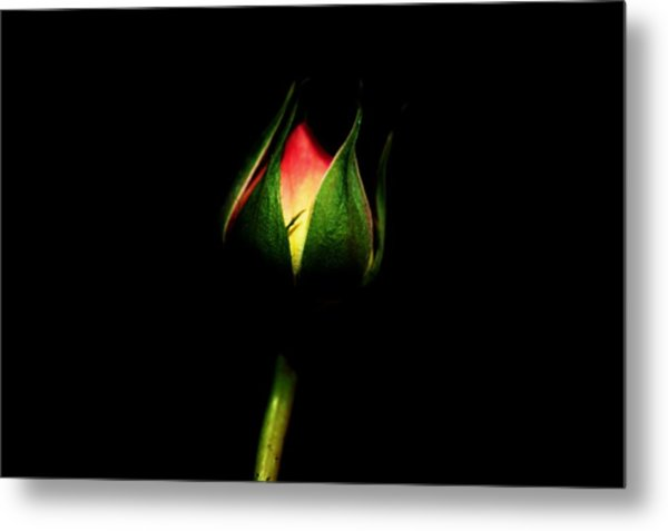 Light In The Darkness Metal Print