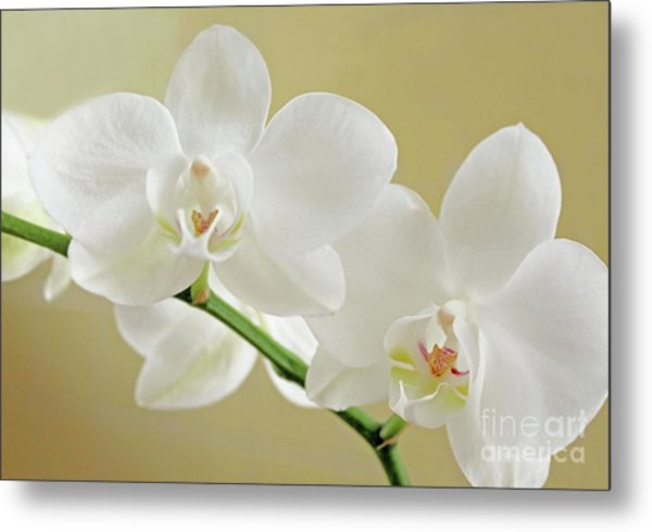 Light On White Metal Print by Lynne M Albright