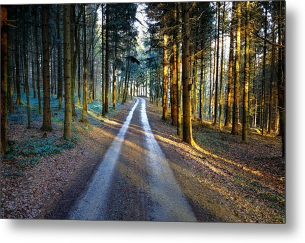 Light Path Crossing In The Woods Metal Print
