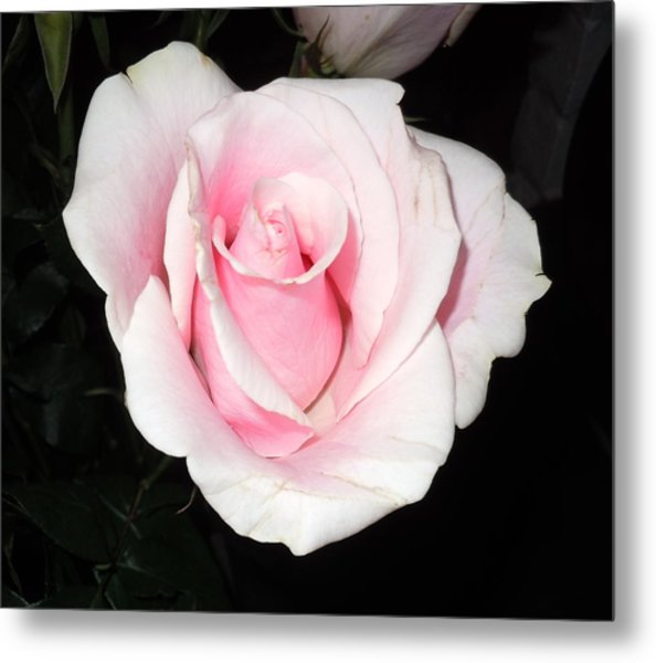 Light Pink Rose Metal Print