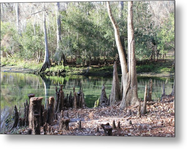 Lighted Springs Metal Print by Michelle Barone