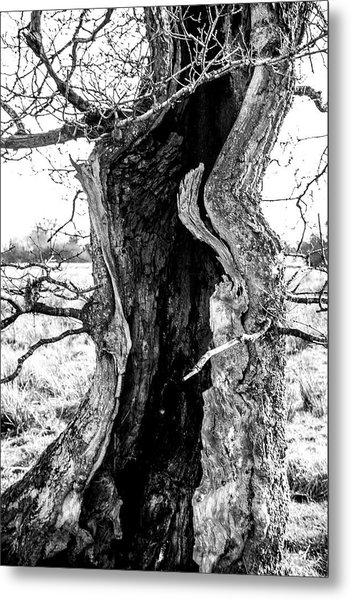 Lightning Tree Metal Print
