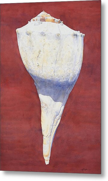 Lightning Whelk Conch II Metal Print