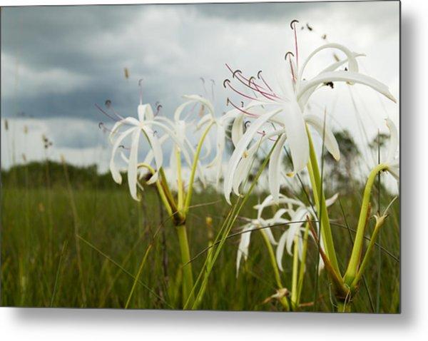 Lilies Thunder Metal Print