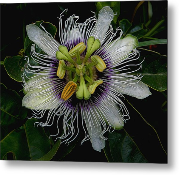 Lilikoi Passion Fruit Metal Print