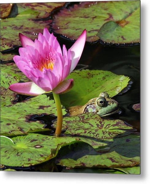Lily And The Bullfrog Metal Print