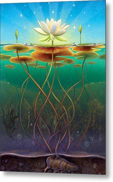 Water Lily - Transmute Metal Print