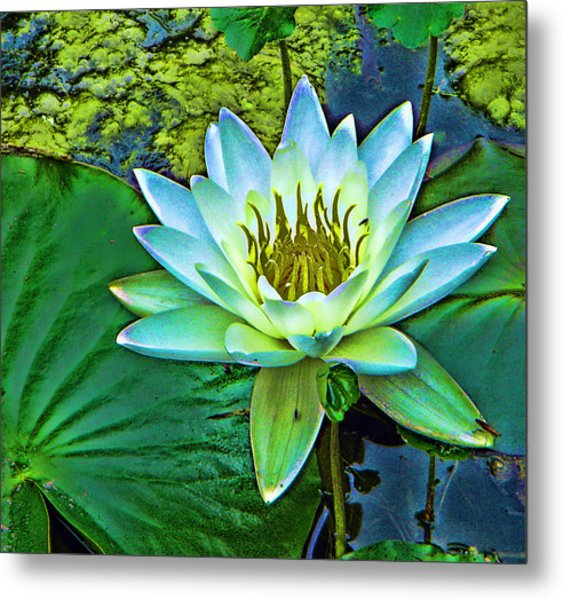 Lily Metal Print by Laurie Prentice