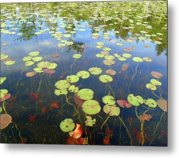 Lily Pads And Reflections Metal Print