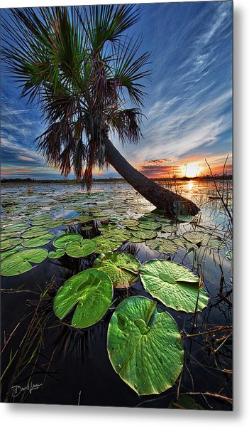 Lily Pads And Sunset Metal Print