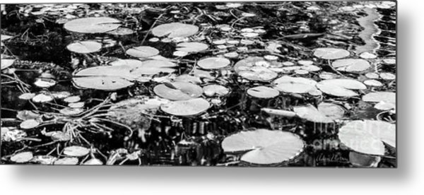 Lily Pads, Black And White Metal Print