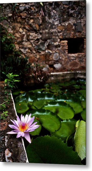 Lily Pond In Ruins. Usvi Metal Print