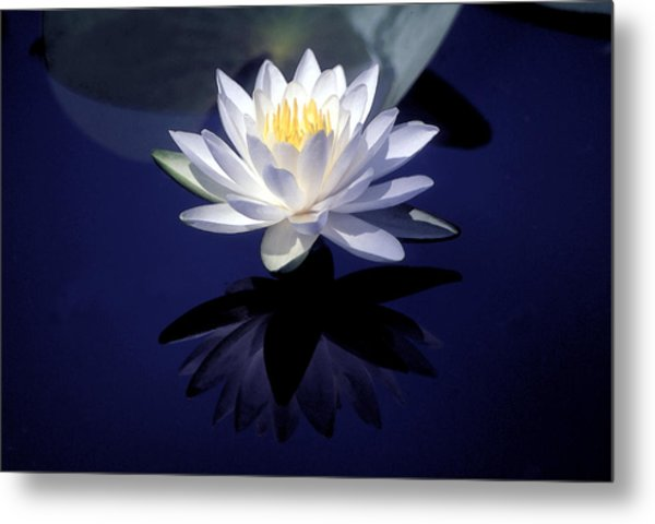 Lily Reflection Metal Print