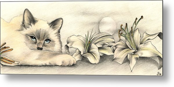 Lily The Birman Metal Print