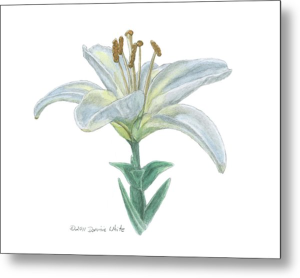 Lily Watercolor Metal Print