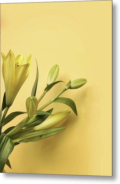 Lily Yellow Metal Print