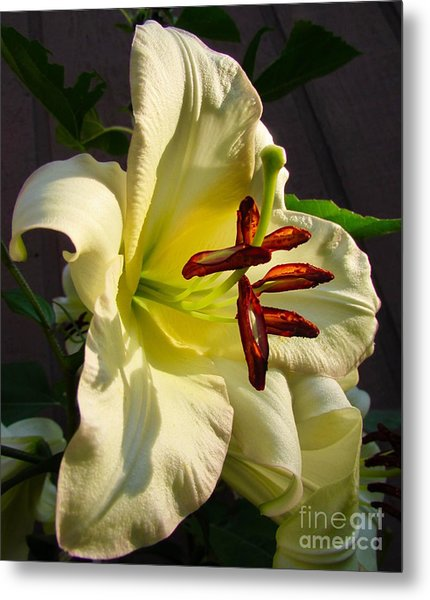 Lily's Morning Metal Print