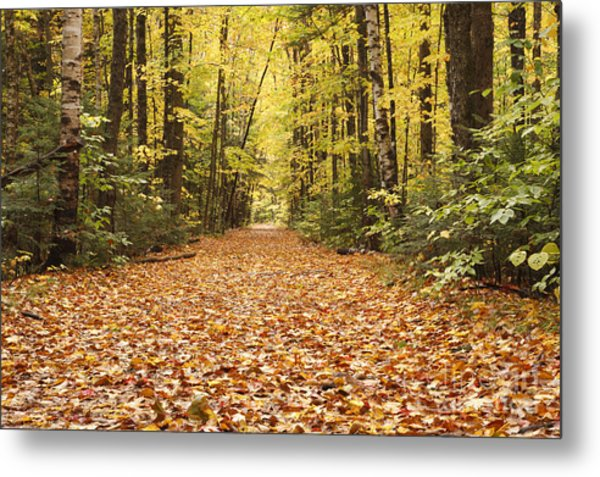 Lincoln Woods Trail  - White Mountains New Hampshire Metal Print