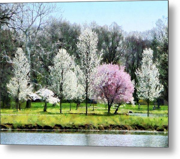 Line Of Flowering Trees Metal Print by Susan Savad