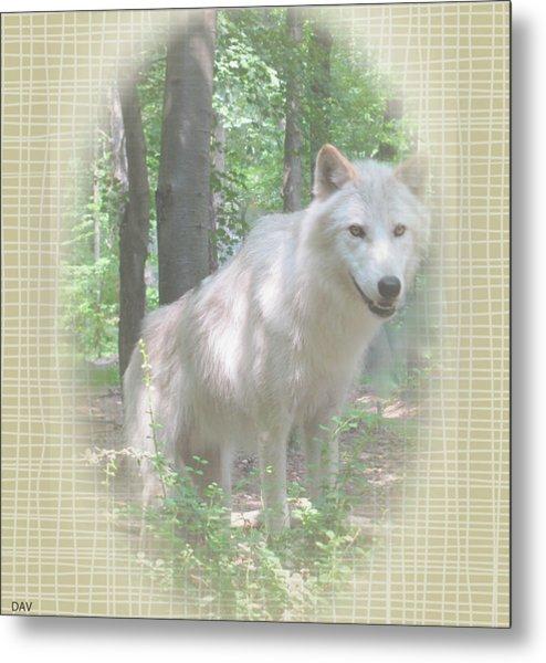 Linen Wolf Pose Metal Print by Debra     Vatalaro