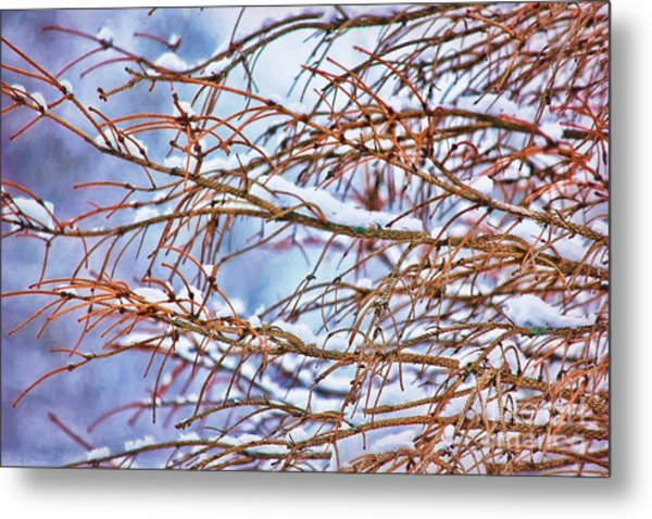 Lingering Winter Snow Metal Print