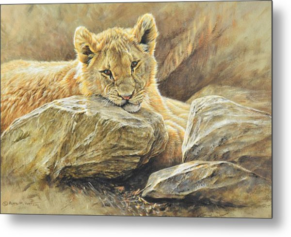 Metal Print featuring the painting Lion Cub Study by Alan M Hunt