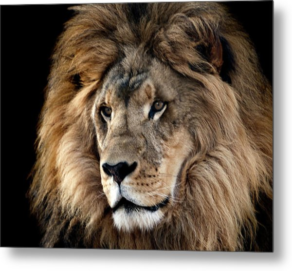 Lion King Of The Jungle 2 Metal Print