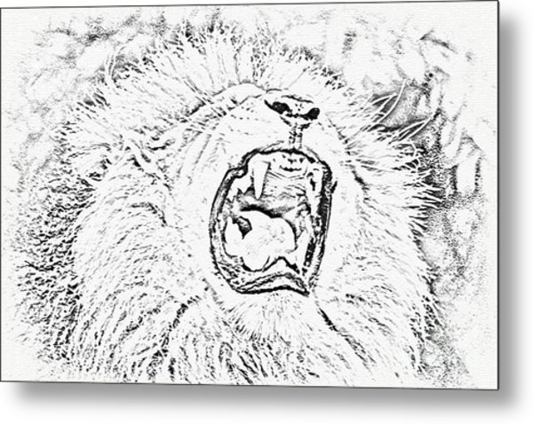 Lion Roar Drawing Metal Print