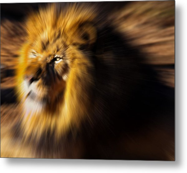 Lion The King Is Comming Metal Print