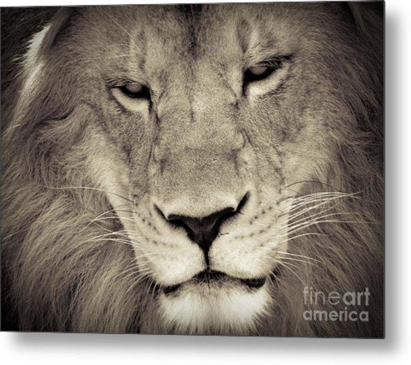 Lion Metal Print by Tonya Laker