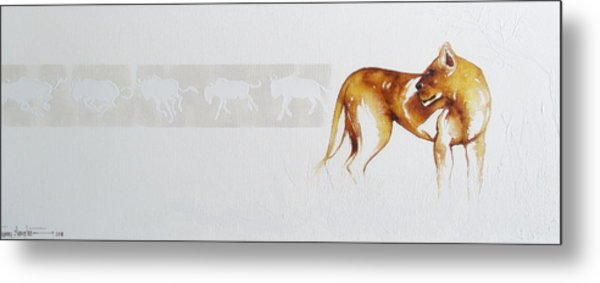Lioness And Wildebeest Metal Print