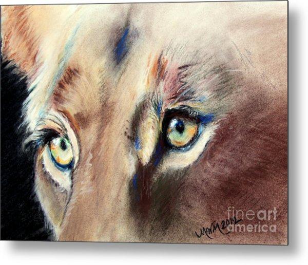 Lioness Eyes Metal Print