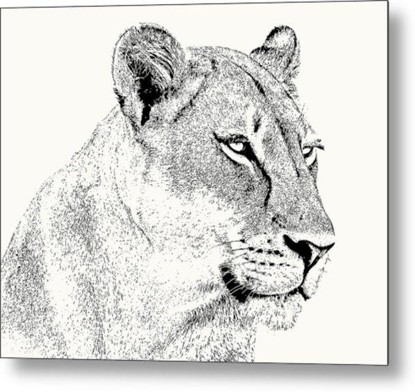 Lioness Portrait Metal Print