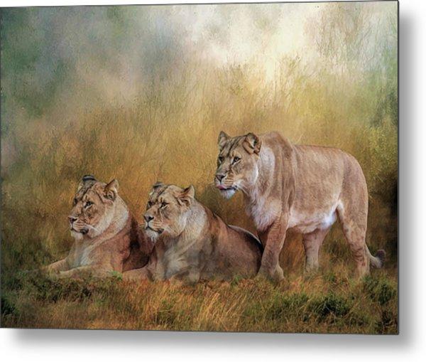 Lionesses Watching The Herd Metal Print
